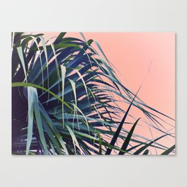 Feather Palm Canvas Print