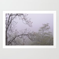 Mountain trees. Into the foggy woods Art Print