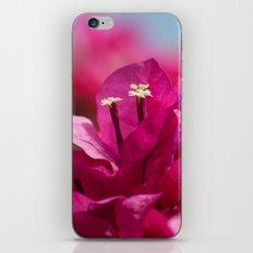 Bougainvillea flowers 843 iPhone & iPod Skin