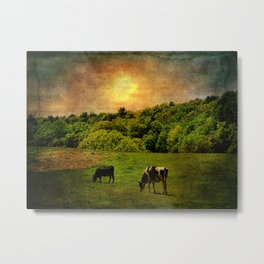 Cows in the Field Metal Print