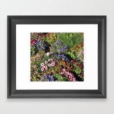 Natures Buttons Framed Art Print