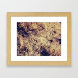 Large Wall Art, Grasses Poster, Modern Wall Art, Color Landscape Photography, Patterns Framed Art Print