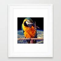 parrot Framed Art Prints featuring Parrot by Cs025