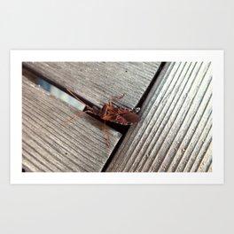 Wood Insect Art Print