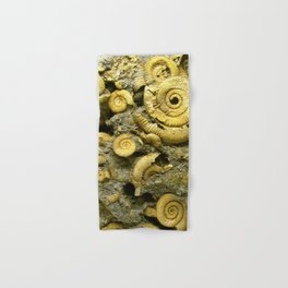 Fossils - Ammonite - Coiled Cephalopods  Hand & Bath Towel