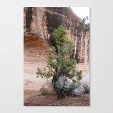 Desert Soloist Canvas Print