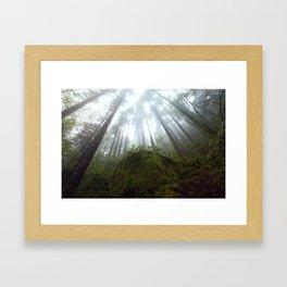Moss Shroud  Framed Art Print