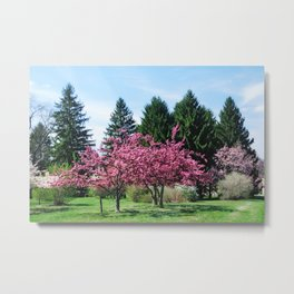 Crab Apple Trees Metal Print