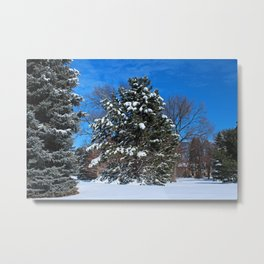 Tenacious Winter Metal Print