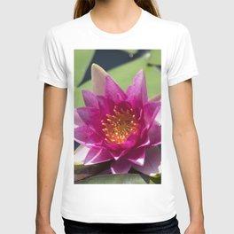 Longwood Gardens - Spring Series 305 T-shirt