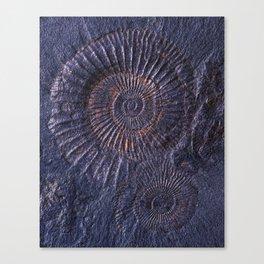 Ancient fossils Canvas Print