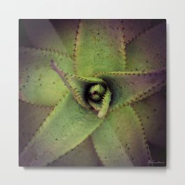 Succulent cactus close-up - Aloe Photography #Society6 Metal Print