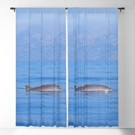 Beaked whale in the mist Blackout Curtain