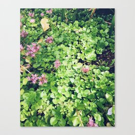 Top view down on the garden Canvas Print