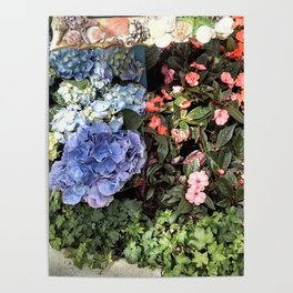 Hydrangeas and Impatiens Poster
