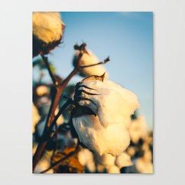 Cotton Field 13 Canvas Print