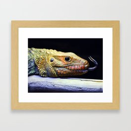 Caiman Lizard Profile Framed Art Print