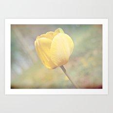 Showy Tulip Art Print
