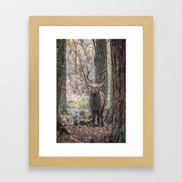 Deer, King Of The Forest Framed Art Print