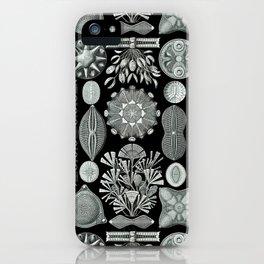Ernst Haeckel - Scientific Illustration - Diatomea iPhone Case