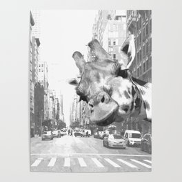 Black and White Selfie Giraffe in NYC Poster