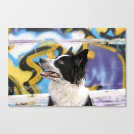 Colorful Bordercollie Canvas Print