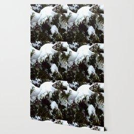 snow trees IIII Wallpaper