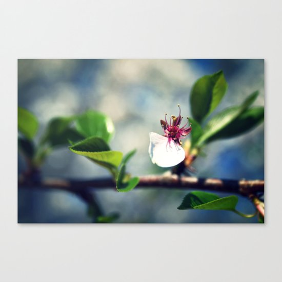 He Loves Me Canvas Print