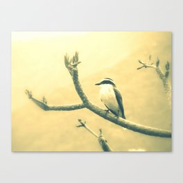 Yellow belly Canvas Print