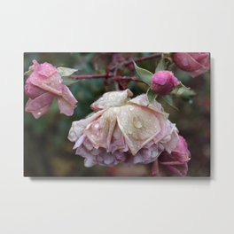 After the frost Metal Print