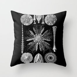 Sand Dollars (Echinidea) by Ernst Haeckel Throw Pillow