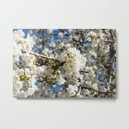 White Blossoms Photography Print Metal Print