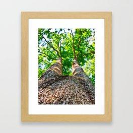 An Ent Framed Art Print