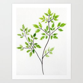 Chervil Watercolor Illustration - Herbs and Leaves Art Print