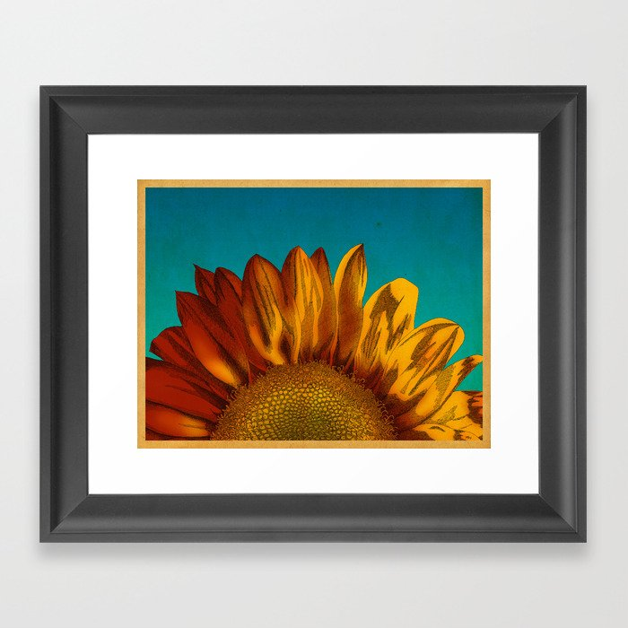 A Sunflower Framed Art Print