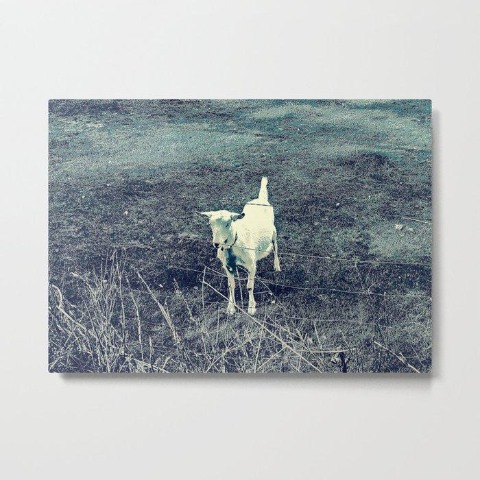 Independent Goat Metal Print