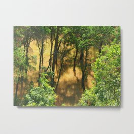 Trees and Shadows II Metal Print