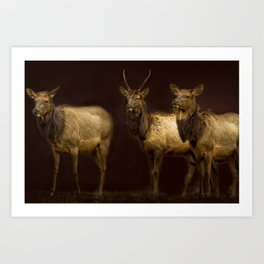 Three Elk Art Print
