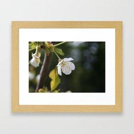 Epleblomst Framed Art Print