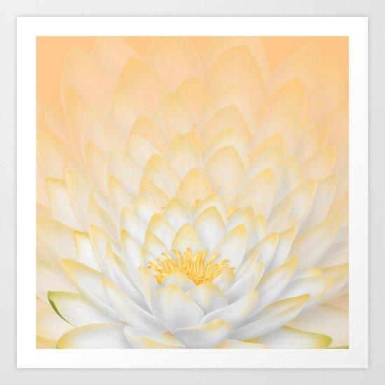 White Peach Lotus Art Print