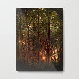 Summer Sunset Metal Print