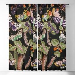 European Butterflies and Moths (1882) Blackout Curtain