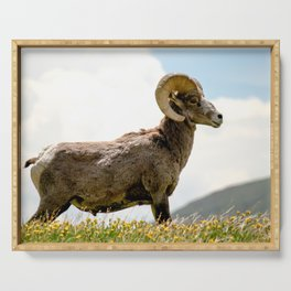 Bighorn Sheep On Humboldt Peak, Colorado Serving Tray