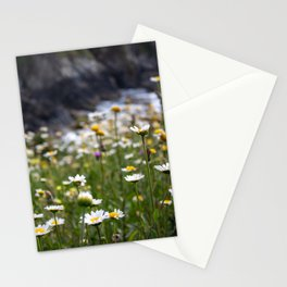 Flowers of daisies in the countryside at sunset Stationery Cards