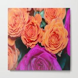 Orange and White Rose w/Pink Tips Metal Print