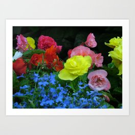 Flower pic 8 Art Print