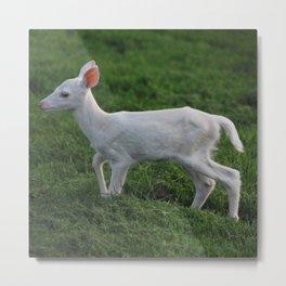 Baby Albino Deer Metal Print