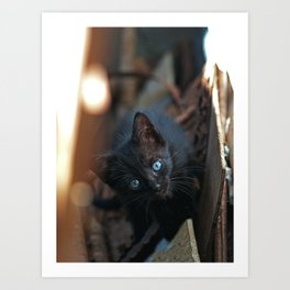 Photography: Kanamme the black cat Art Print