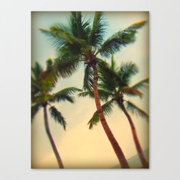 Key West Palms Canvas Print