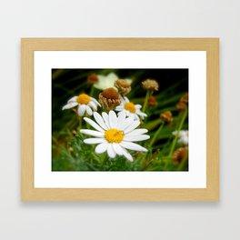 Daisy Life Framed Art Print